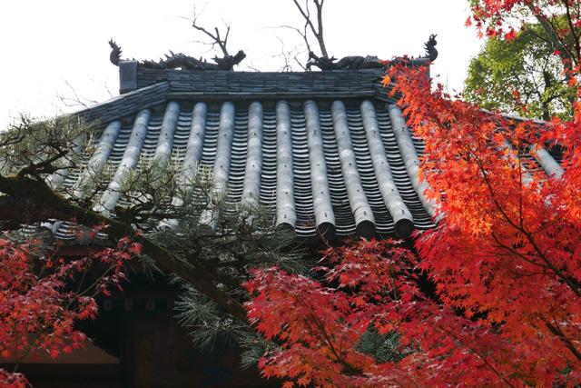 永観堂の写真