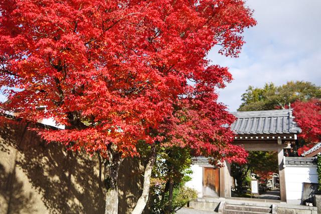 鷹峯の円成寺
