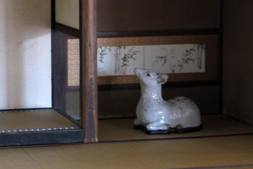 圓光寺の鹿