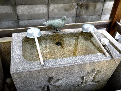 首途八幡宮の鳩