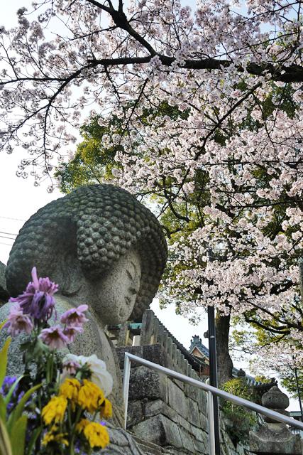 金戒光明寺のアフロ仏と桜の写真