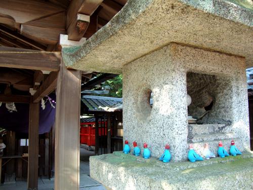 三宅八幡の鳩