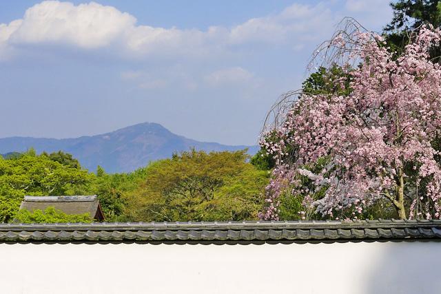 正伝寺の写真
