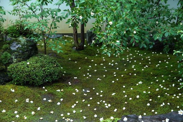 妙心寺東林院の夏椿